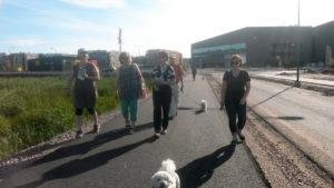Koirakäcely ja Suurpelto-Henttaa-kävely