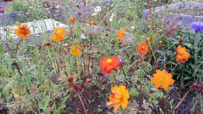 kuvituskuva, kauniita kukkia
