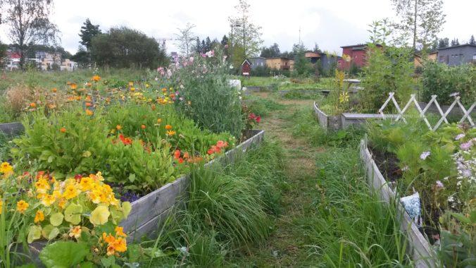 Kukkia ja vihanneksia viljelylavoilla